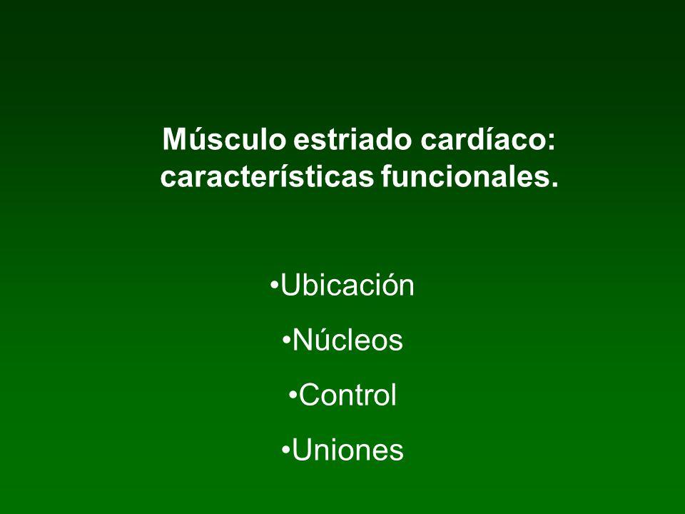 Músculo estriado cardíaco: características funcionales.