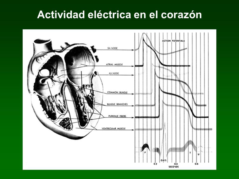 Actividad eléctrica en el corazón