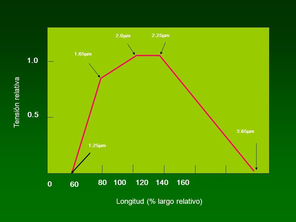 Longitud (% largo relativo)