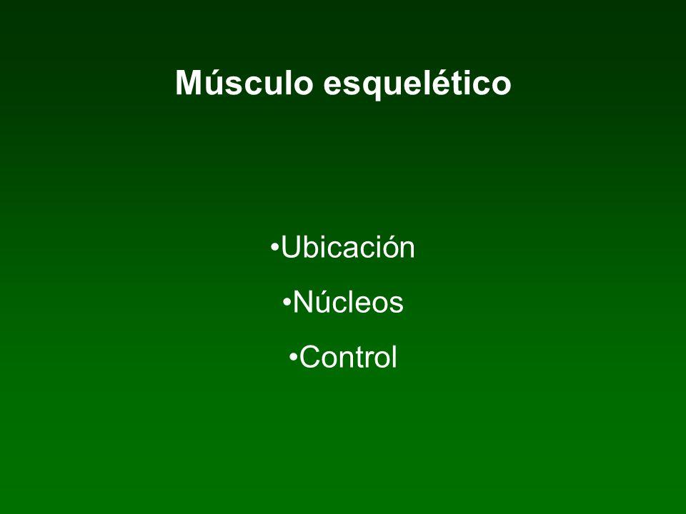 Músculo esquelético Ubicación Núcleos Control