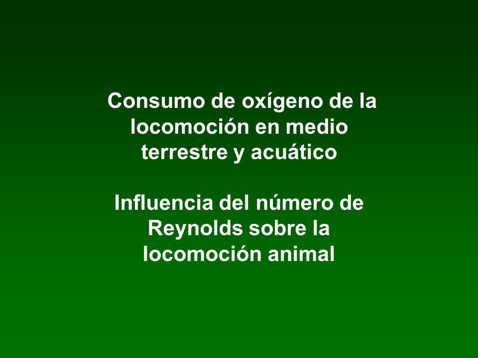 Consumo de oxígeno de la locomoción en medio terrestre y acuático