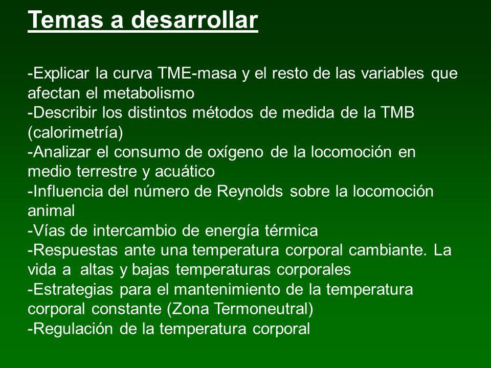 Temas a desarrollar -Explicar la curva TME-masa y el resto de las variables que afectan el metabolismo.