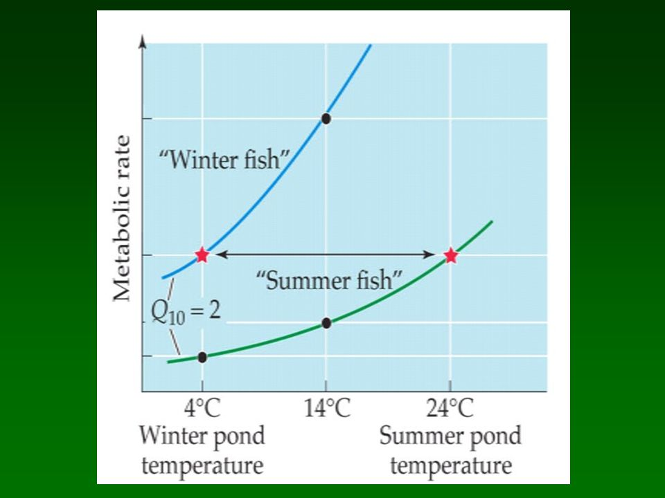 Adaptacion a temp variable: Compensacion mediante aclimatacion