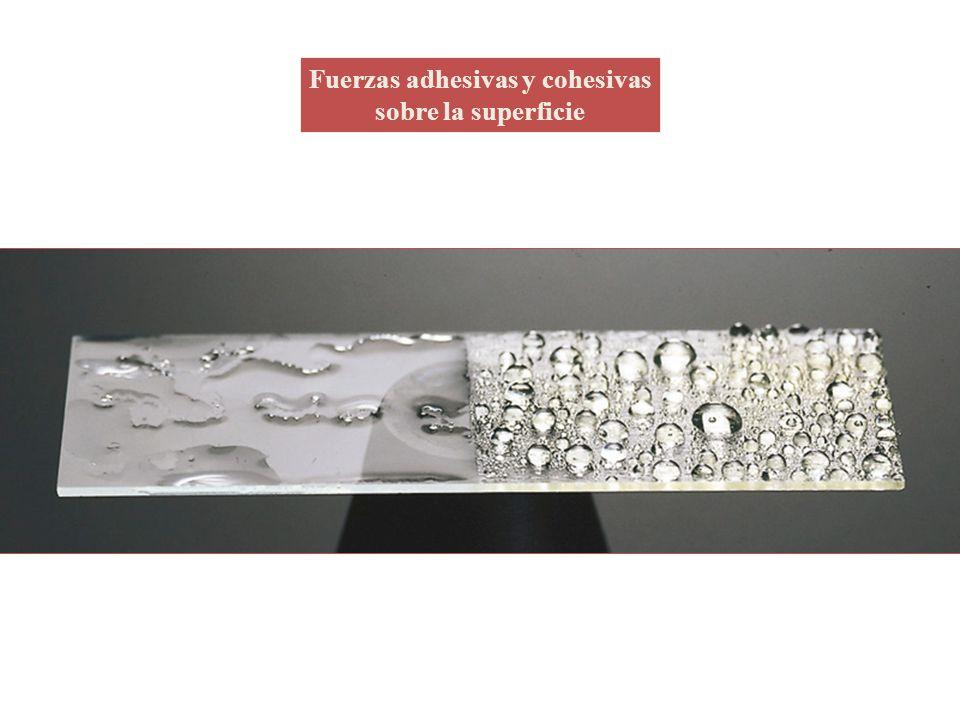 Fuerzas adhesivas y cohesivas