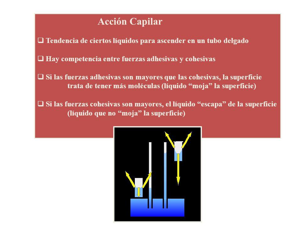 Acción Capilar Tendencia de ciertos líquidos para ascender en un tubo delgado. Hay competencia entre fuerzas adhesivas y cohesivas.