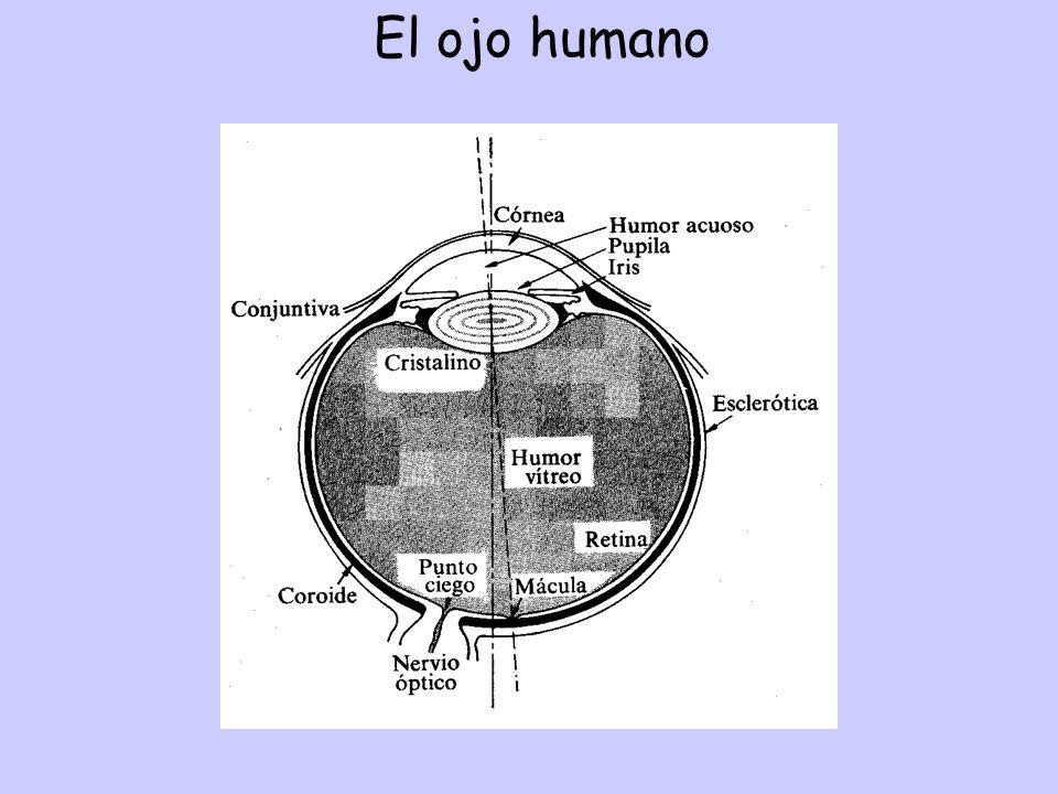 El ojo humano cuación aumentos TRANS. LONG. Espejo esférico