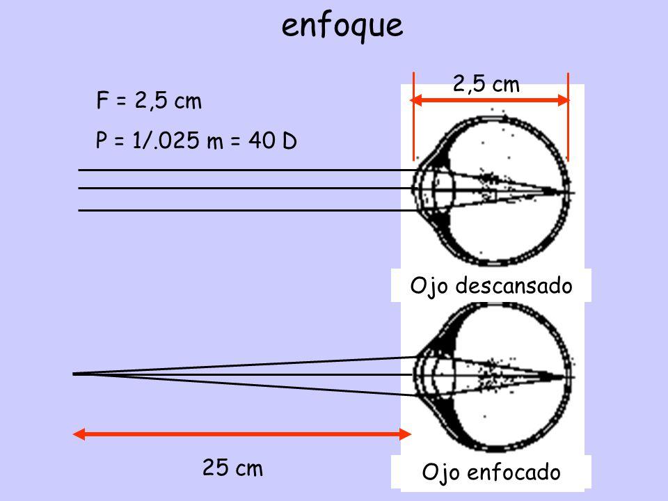 enfoque 2,5 cm F = 2,5 cm P = 1/.025 m = 40 D Ojo descansado 25 cm