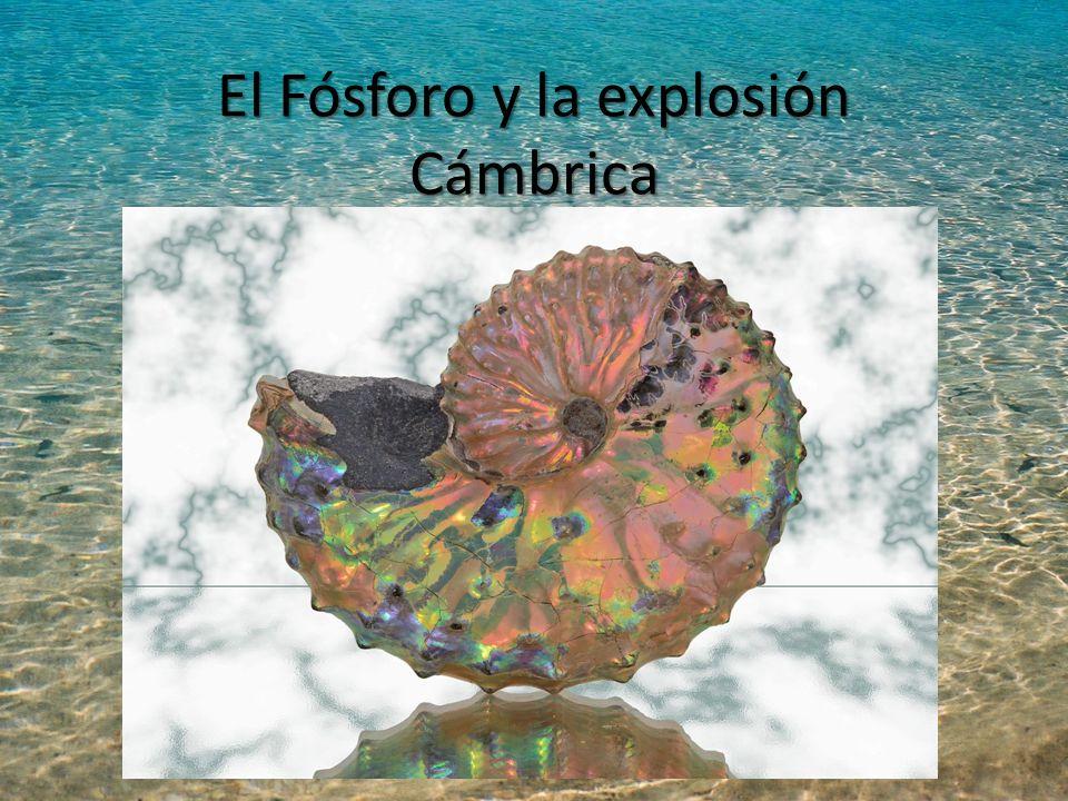 El Fósforo y la explosión Cámbrica
