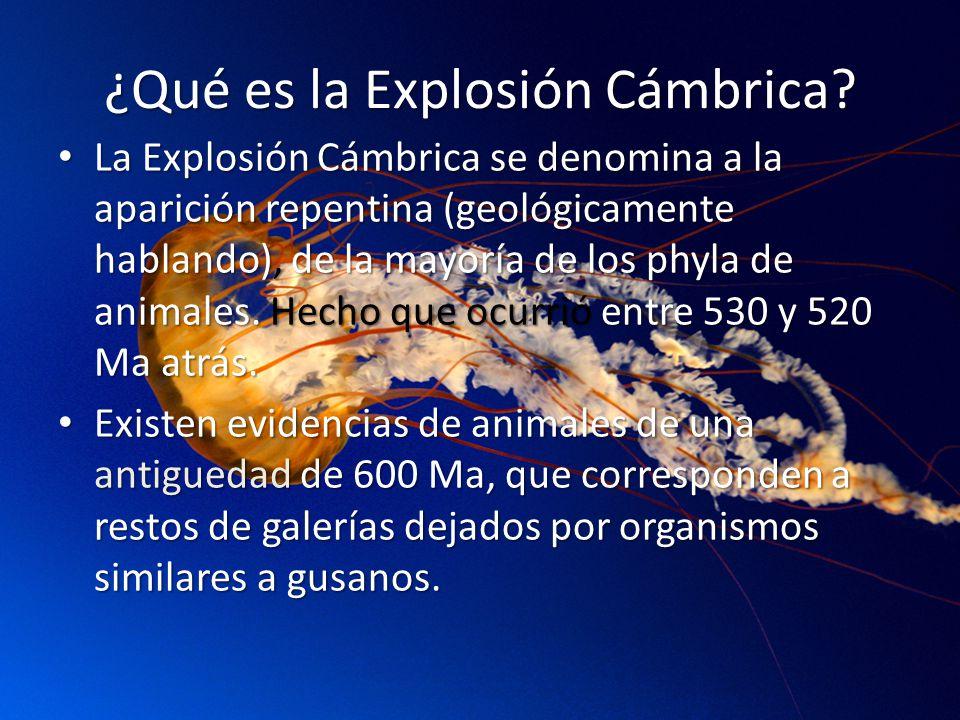 ¿Qué es la Explosión Cámbrica