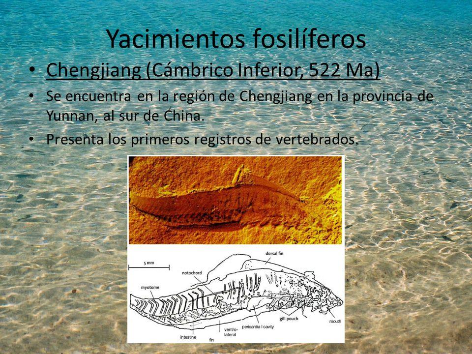 Yacimientos fosilíferos