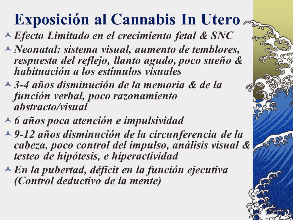 Exposición al Cannabis In Utero