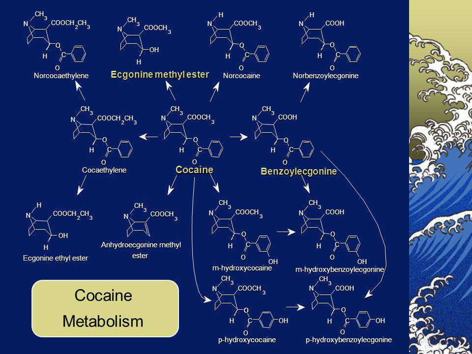 Cocaine Metabolism Cocaine Ecgonine methyl ester Benzoylecgonine