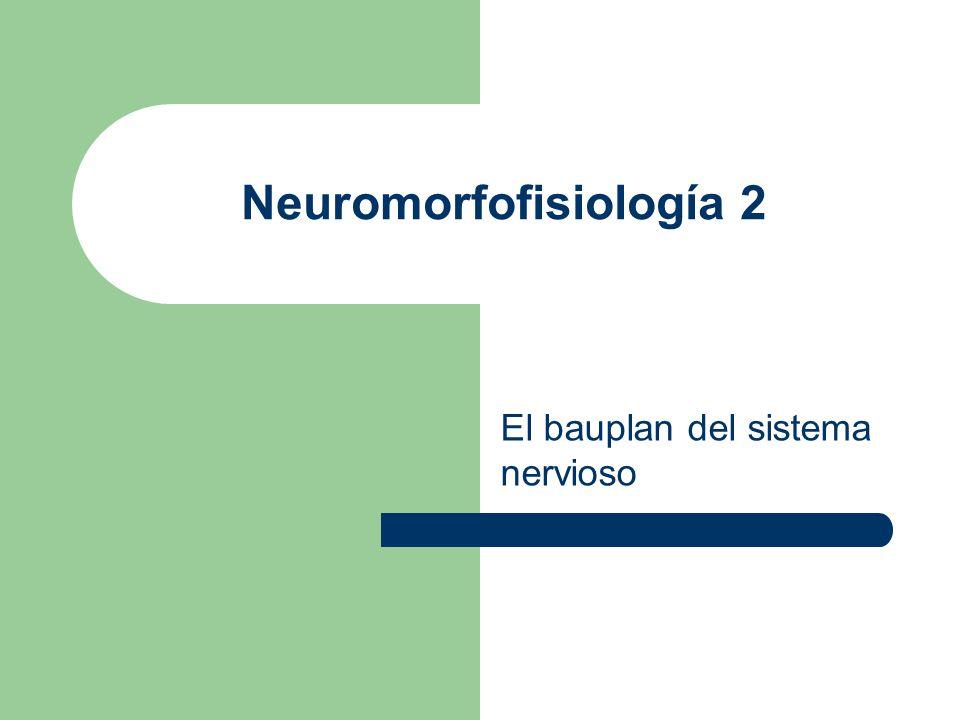 Neuromorfofisiología 2