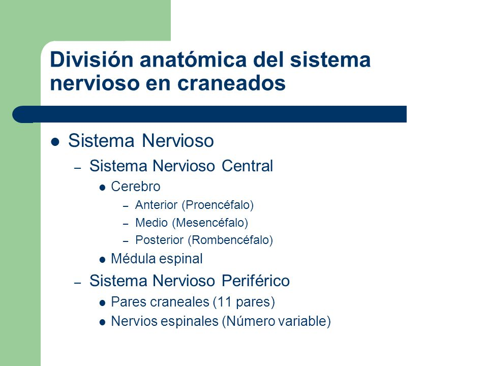 División anatómica del sistema nervioso en craneados