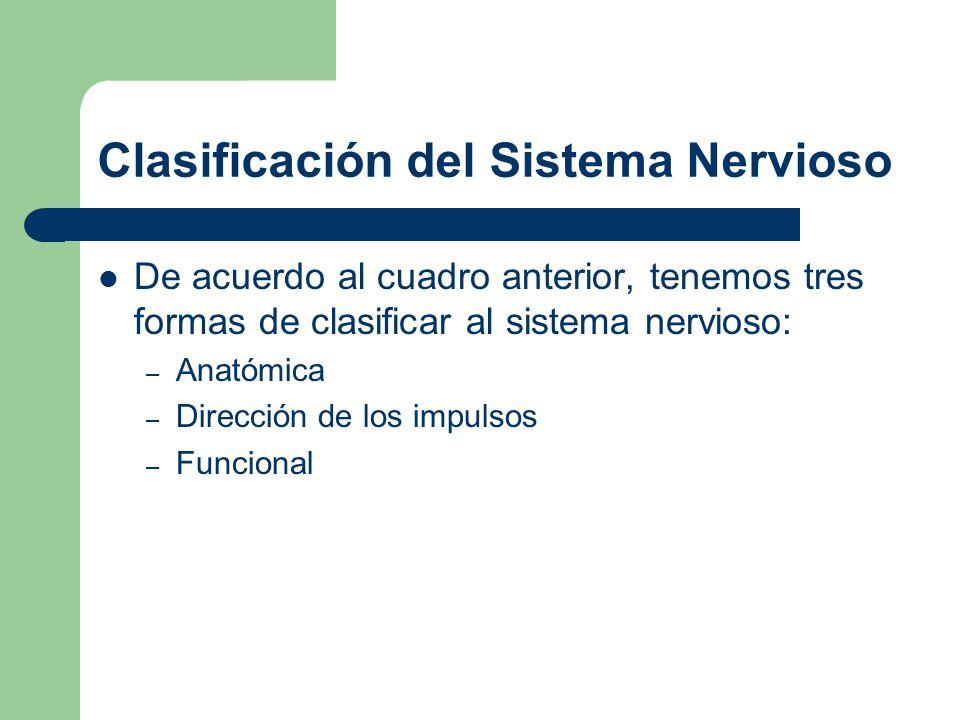 Clasificación del Sistema Nervioso