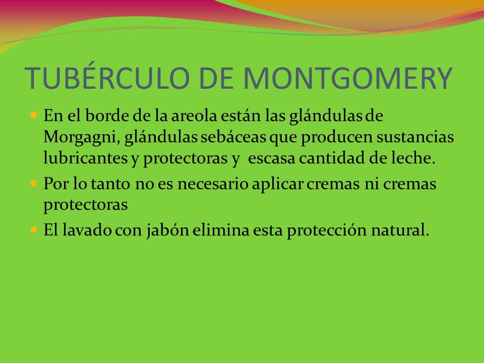 TUBÉRCULO DE MONTGOMERY