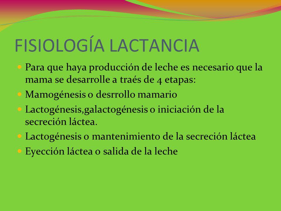 FISIOLOGÍA LACTANCIA Para que haya producción de leche es necesario que la mama se desarrolle a traés de 4 etapas: