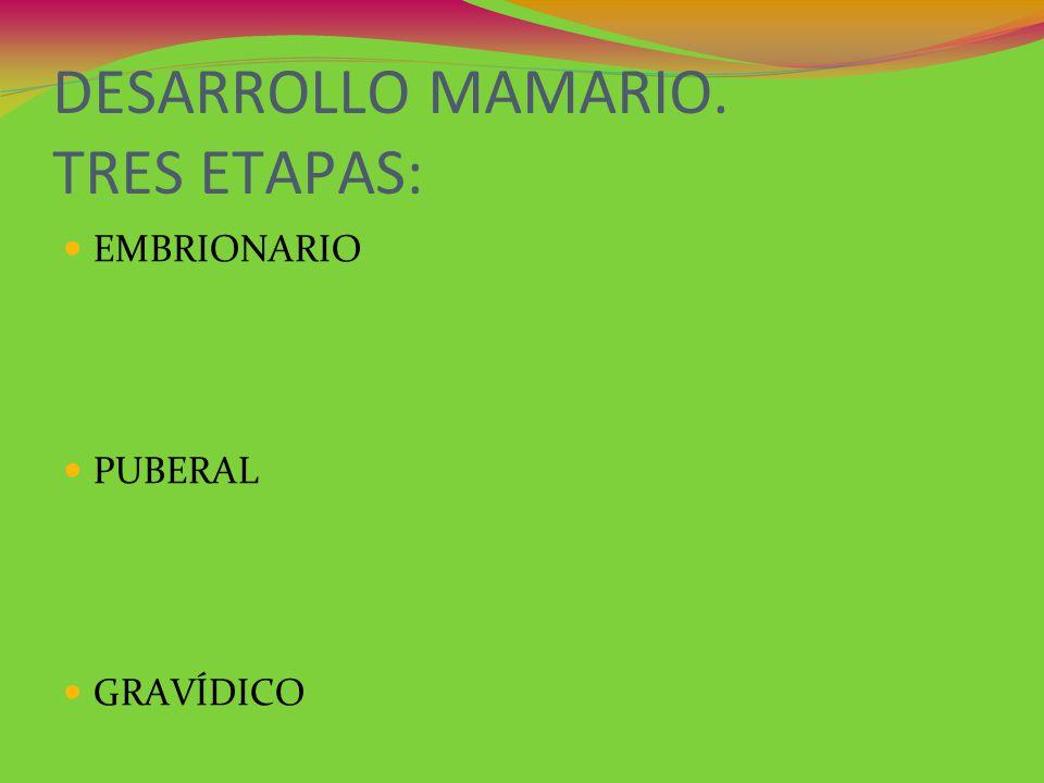 DESARROLLO MAMARIO. TRES ETAPAS: