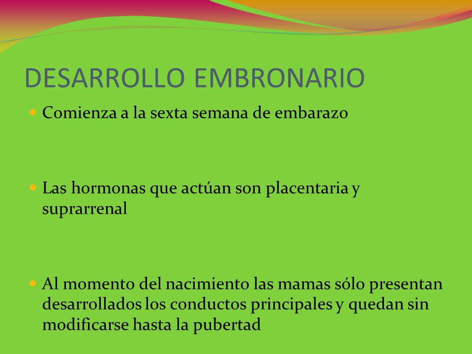 DESARROLLO EMBRONARIO