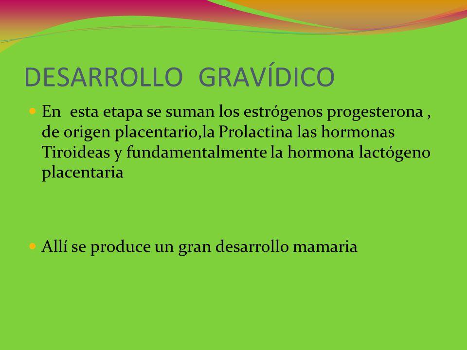 DESARROLLO GRAVÍDICO
