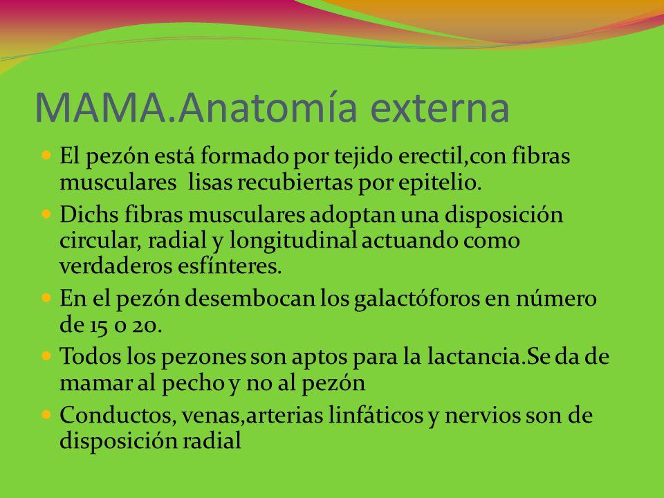 MAMA.Anatomía externa El pezón está formado por tejido erectil,con fibras musculares lisas recubiertas por epitelio.