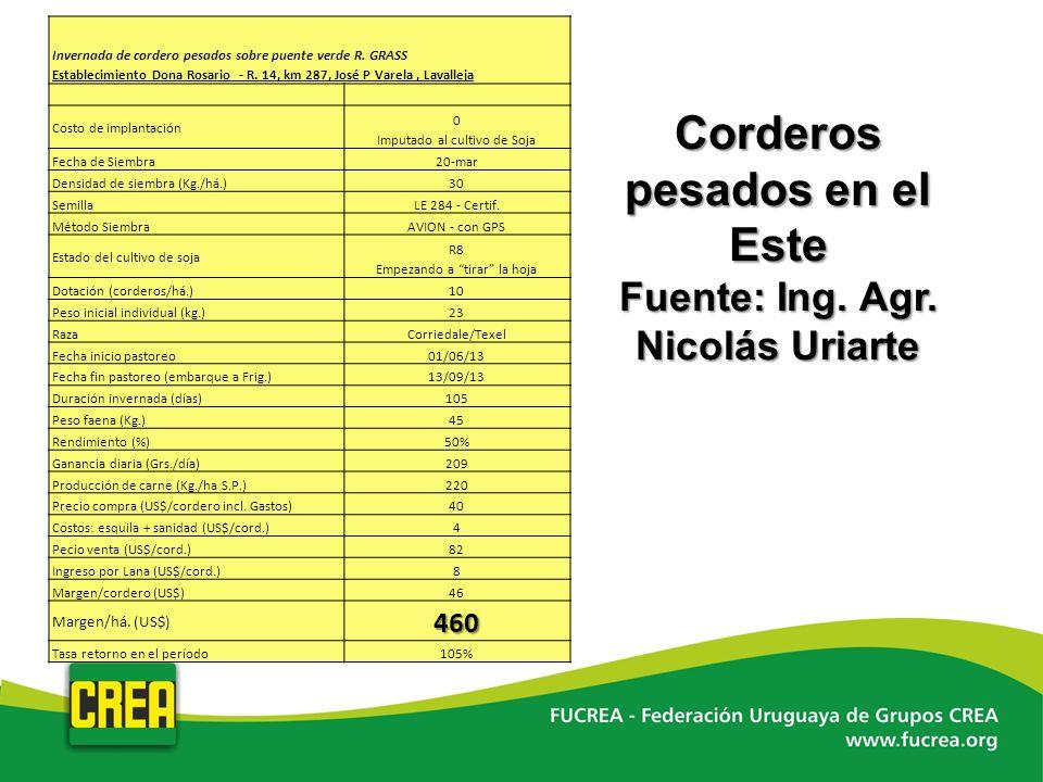 Corderos pesados en el Este Fuente: Ing. Agr. Nicolás Uriarte