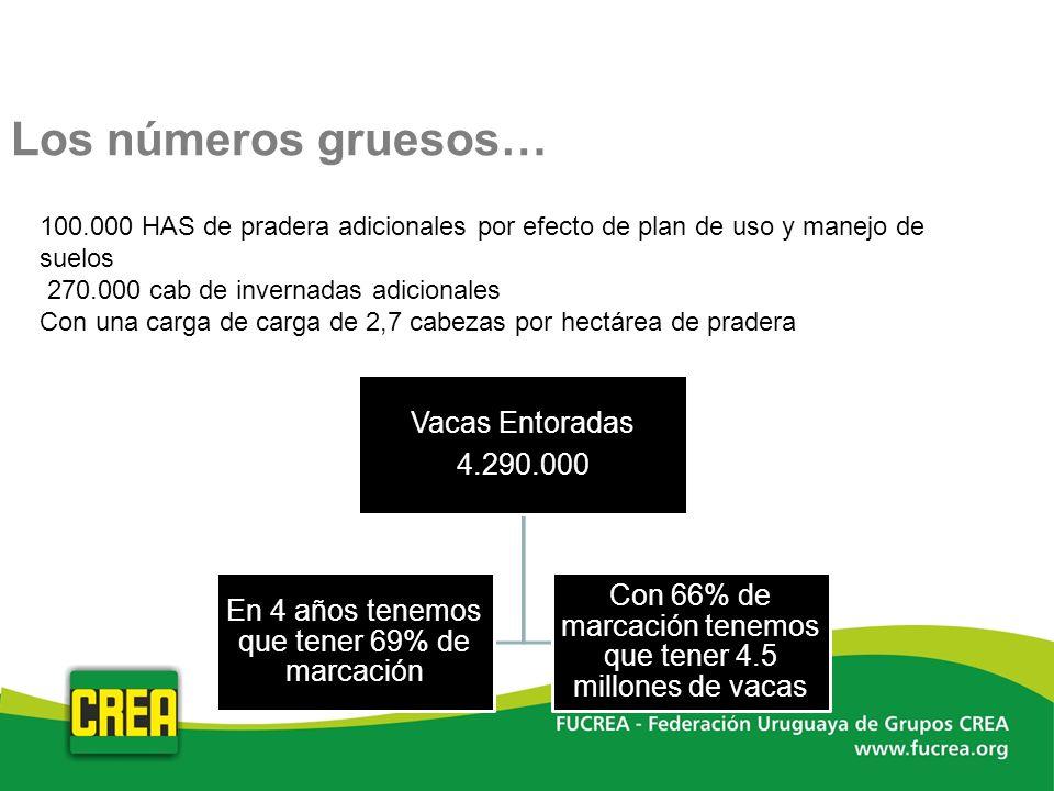 Los números gruesos… 100.000 HAS de pradera adicionales por efecto de plan de uso y manejo de suelos.