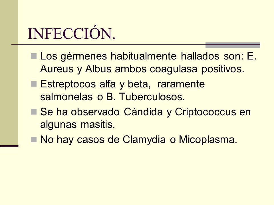 INFECCIÓN. Los gérmenes habitualmente hallados son: E. Aureus y Albus ambos coagulasa positivos.