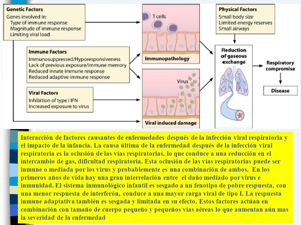 Interacción de factores causantes de enfermedades después de la infección viral respiratoria y el impacto de la infancia.