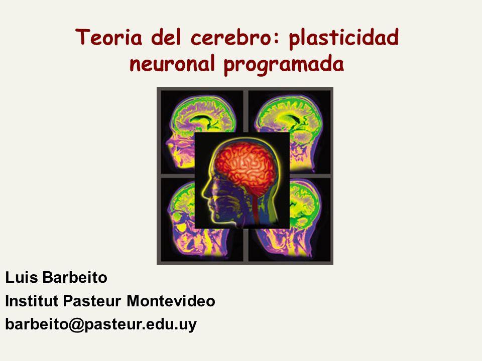 Teoria del cerebro: plasticidad neuronal programada