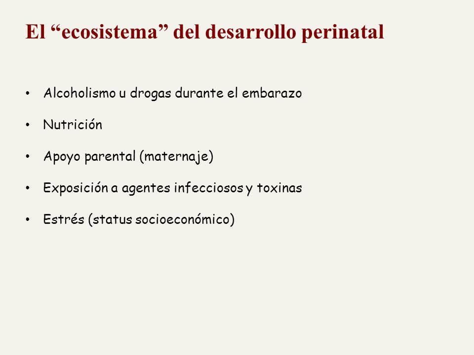 El ecosistema del desarrollo perinatal
