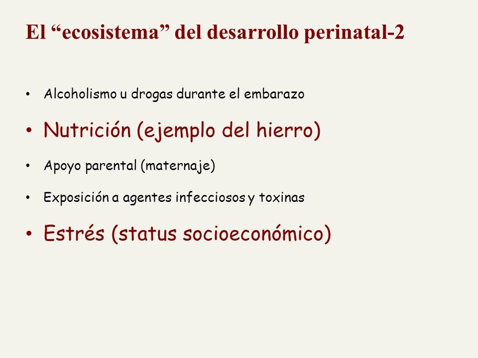 El ecosistema del desarrollo perinatal-2