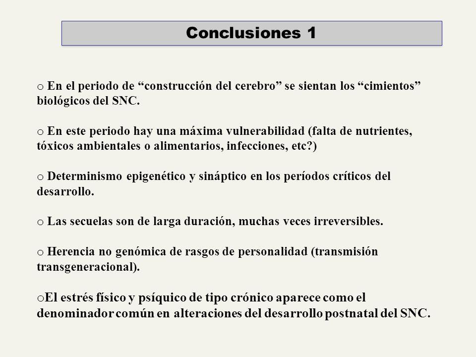 Conclusiones 1 En el periodo de construcción del cerebro se sientan los cimientos biológicos del SNC.