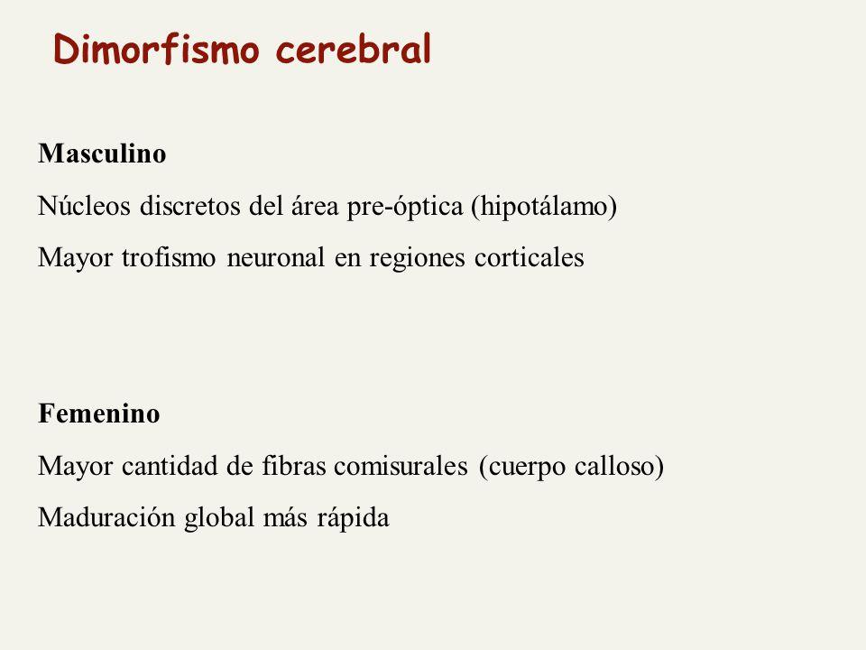 Dimorfismo cerebral Masculino