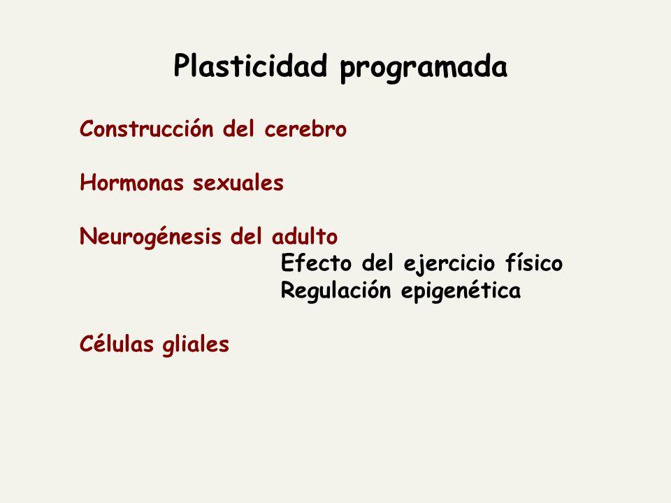Plasticidad programada