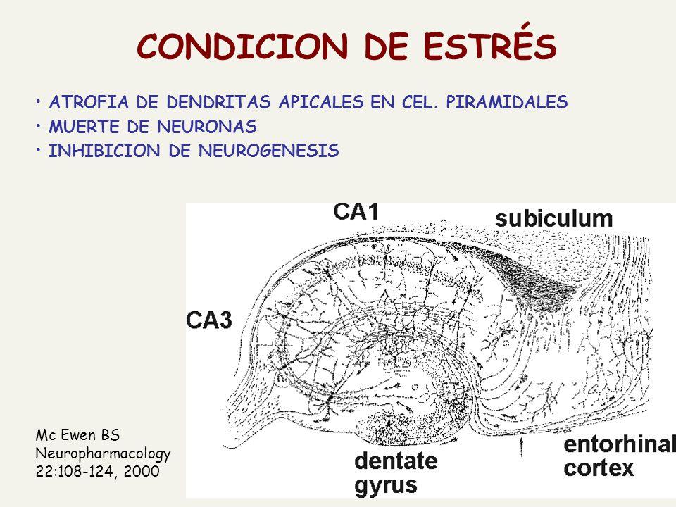 CONDICION DE ESTRÉS ATROFIA DE DENDRITAS APICALES EN CEL. PIRAMIDALES