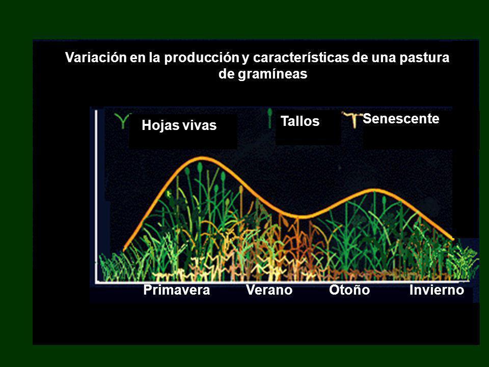 Variación en la producción y características de una pastura