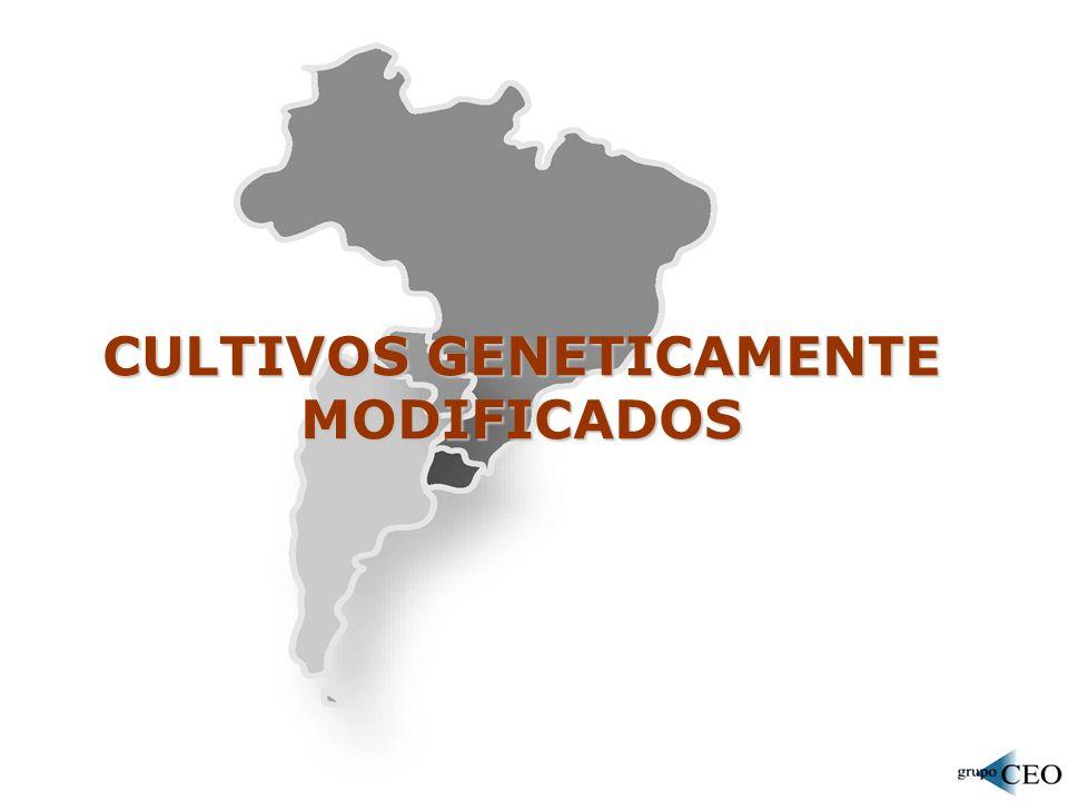 CULTIVOS GENETICAMENTE MODIFICADOS