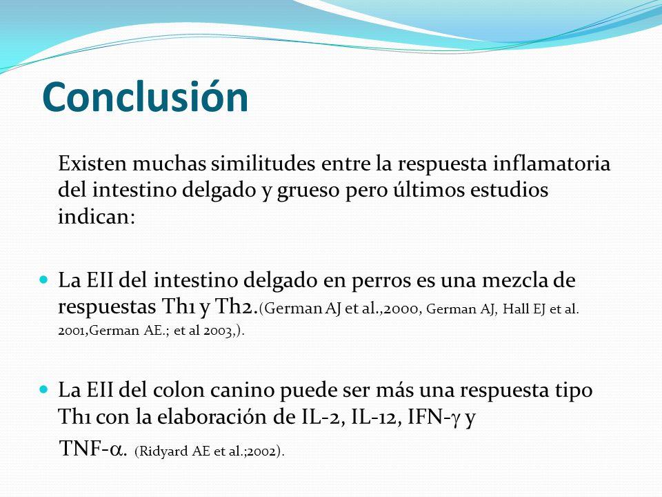 Conclusión Existen muchas similitudes entre la respuesta inflamatoria del intestino delgado y grueso pero últimos estudios indican: