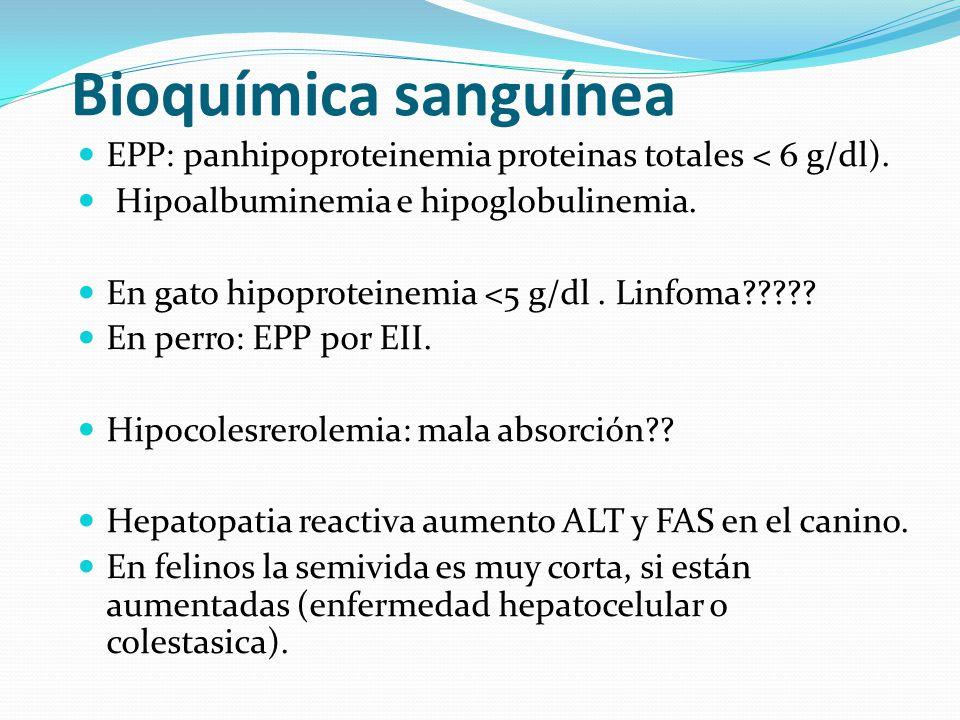 Bioquímica sanguínea EPP: panhipoproteinemia proteinas totales < 6 g/dl). Hipoalbuminemia e hipoglobulinemia.