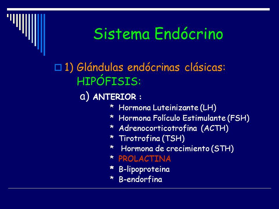 Sistema Endócrino 1) Glándulas endócrinas clásicas: HIPÓFISIS:
