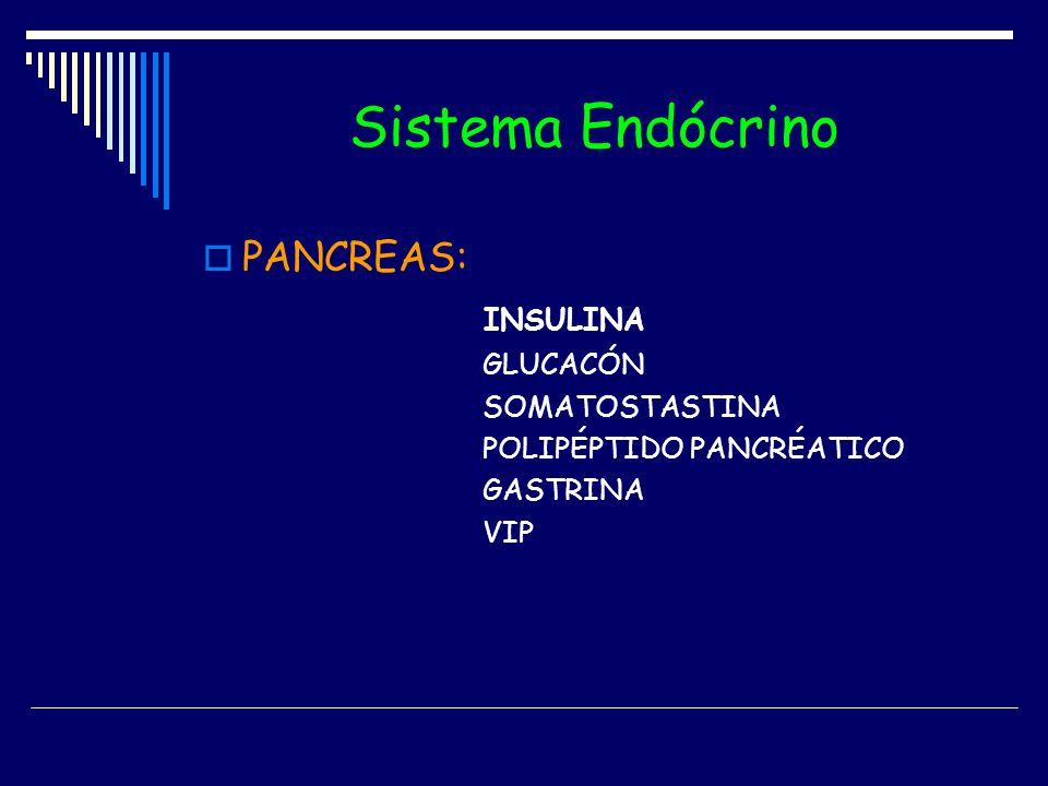 Sistema Endócrino PANCREAS: INSULINA GLUCACÓN SOMATOSTASTINA