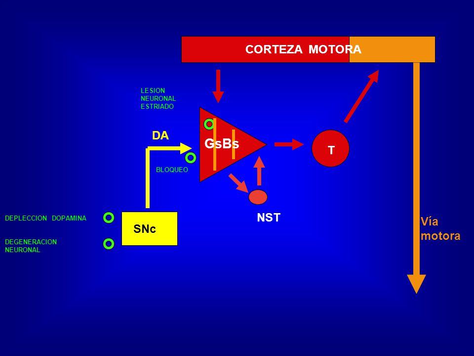 GsBs CORTEZA MOTORA DA T NST Vía motora SNc LESION NEURONAL ESTRIADO
