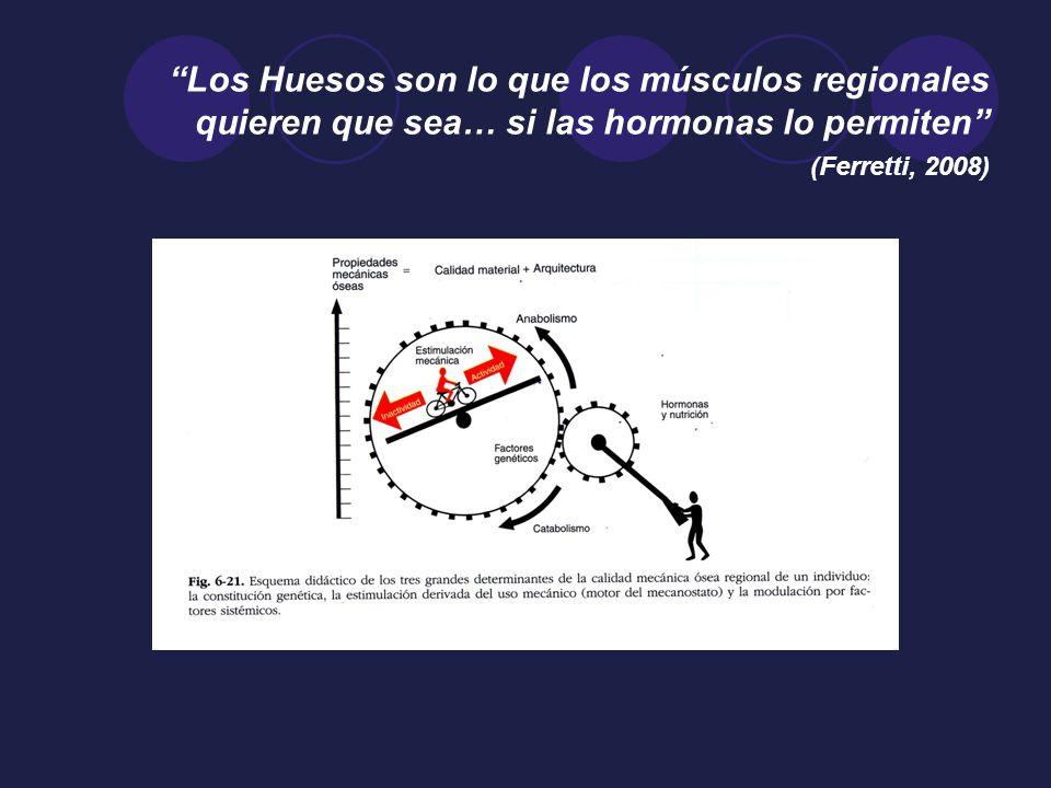 Los Huesos son lo que los músculos regionales quieren que sea… si las hormonas lo permiten (Ferretti, 2008)