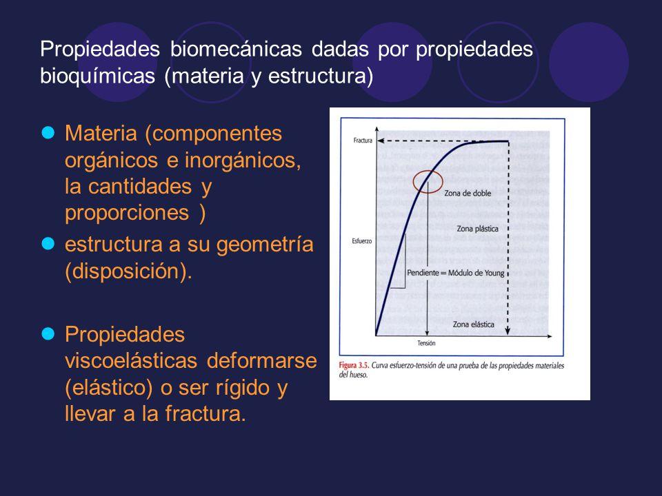Propiedades biomecánicas dadas por propiedades bioquímicas (materia y estructura)