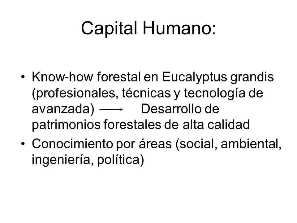 Capital Humano: