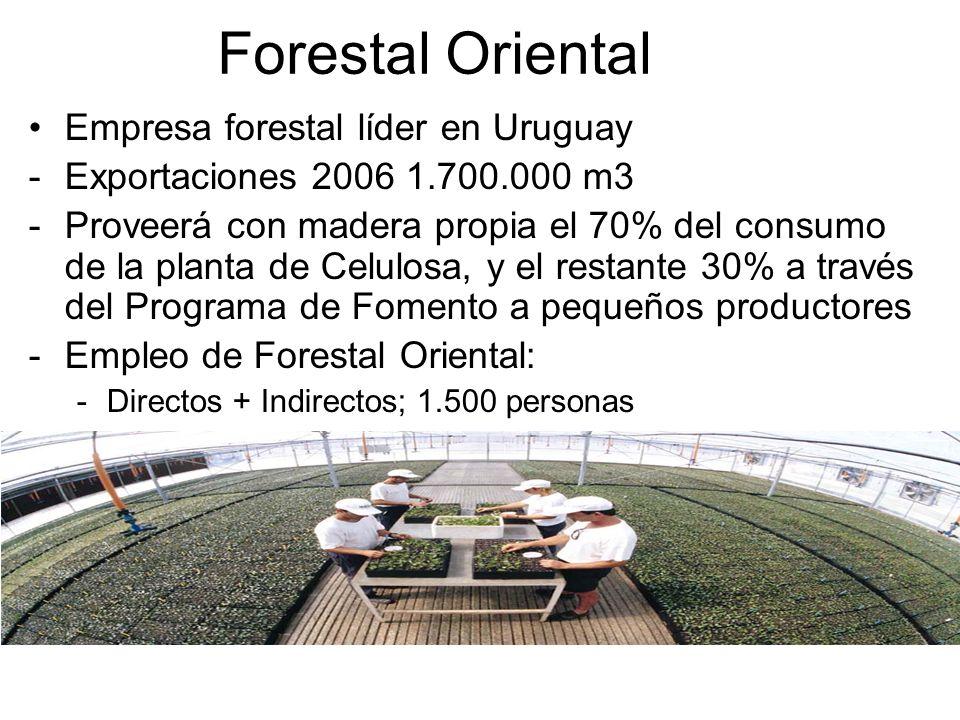 Forestal Oriental Empresa forestal líder en Uruguay