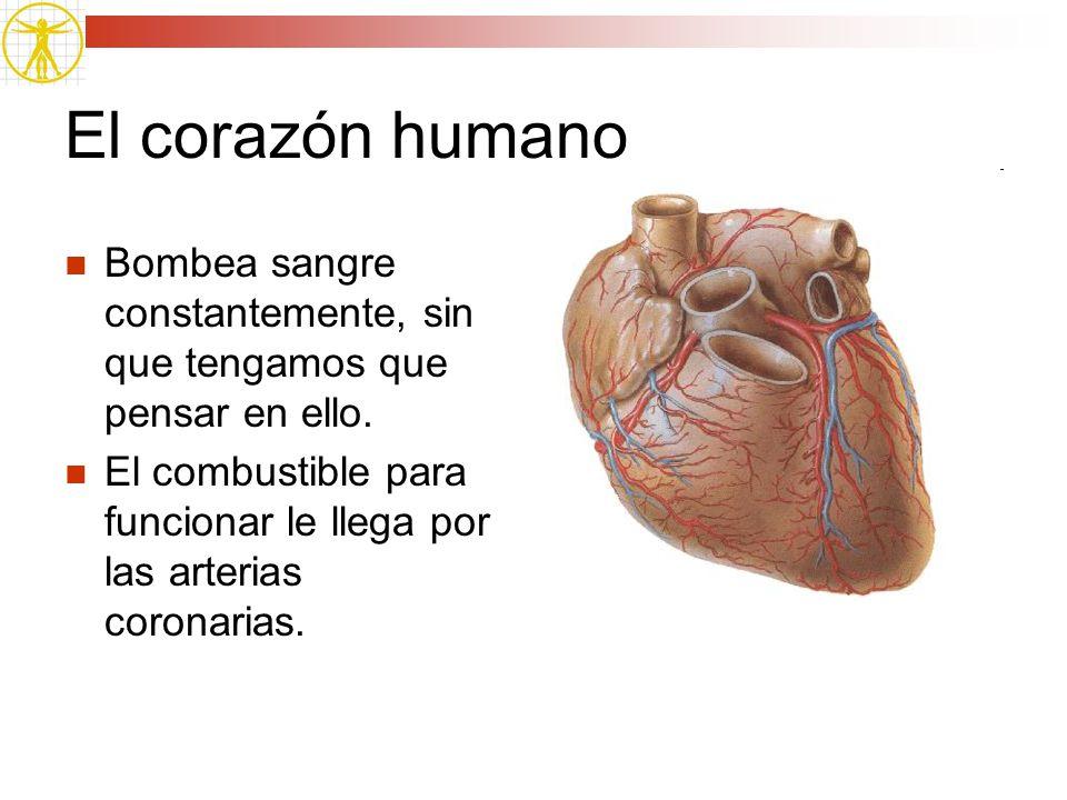 El corazón humano Bombea sangre constantemente, sin que tengamos que pensar en ello.