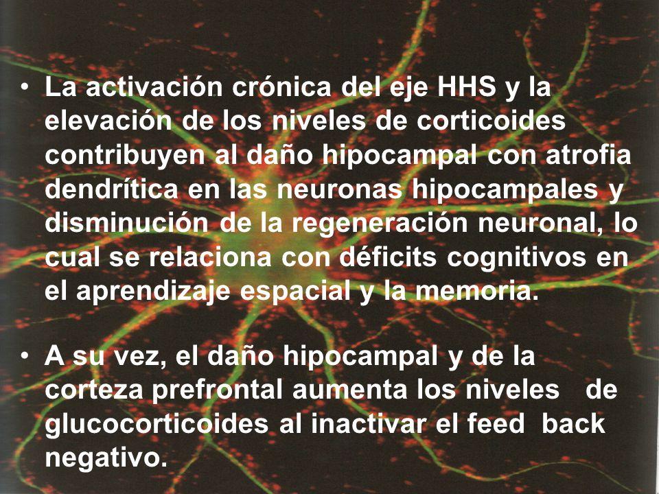 La activación crónica del eje HHS y la elevación de los niveles de corticoides contribuyen al daño hipocampal con atrofia dendrítica en las neuronas hipocampales y disminución de la regeneración neuronal, lo cual se relaciona con déficits cognitivos en el aprendizaje espacial y la memoria.