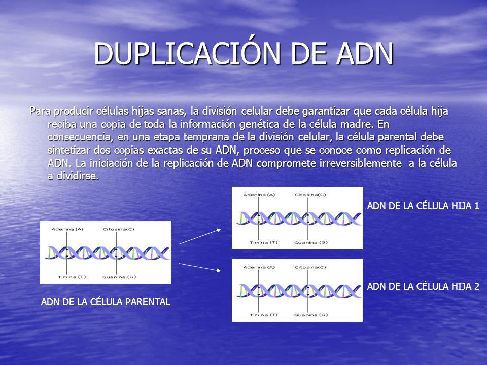DUPLICACIÓN DE ADN